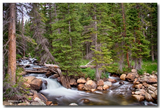 Colorado Rocky Mountain Forest Stream Art Print