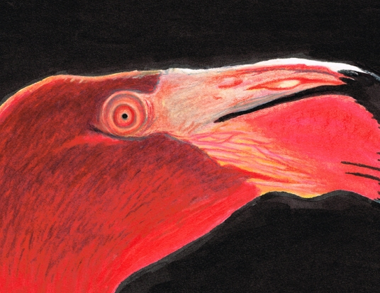 FlamingoClose