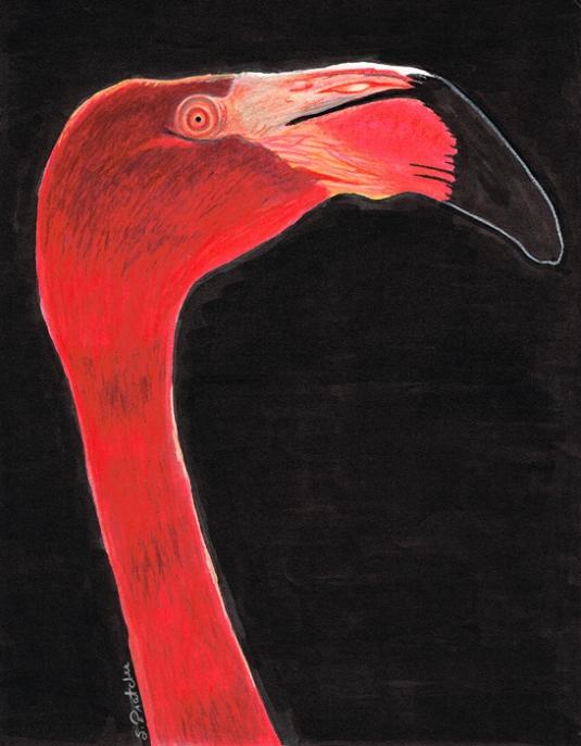 FlamingoFB