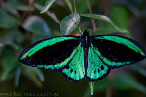 melbourne-zoo-butterfly-house-9