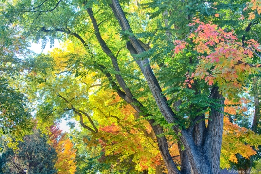 Getting Lost in the Colorful Autumn Trees Photography Prints