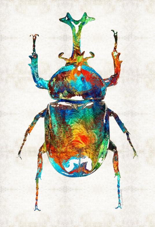 ColorfulBeetleFB