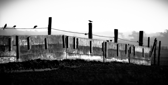fence & birds