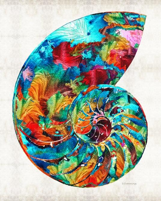ColorfulNautilusFB