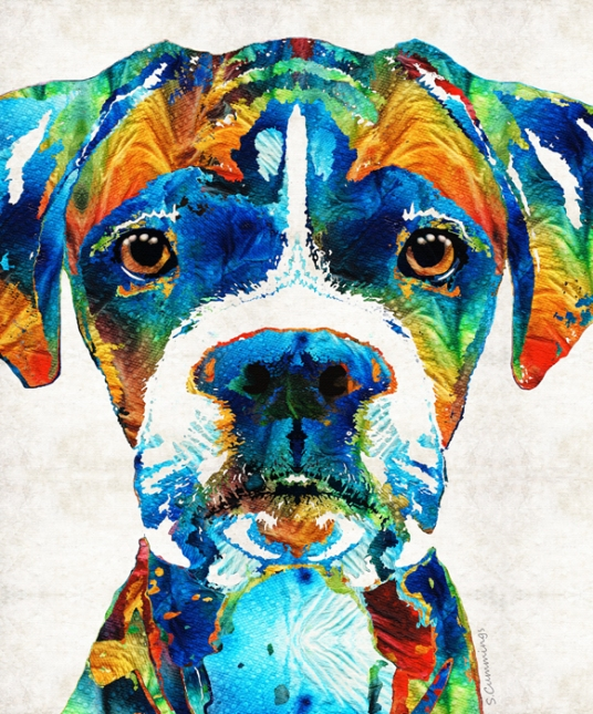 ColorfulBoxerFB